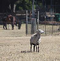 Name: sheep03.jpg Views: 64 Size: 859.5 KB Description: