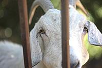 Name: goat09.jpg Views: 69 Size: 1.35 MB Description: