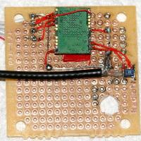 Name: ant555_02.jpg