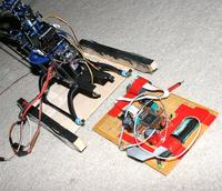 Name: trex08.jpg