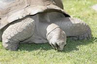 Name: turtle01.jpg Views: 180 Size: 170.8 KB Description: