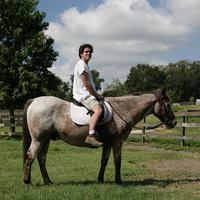 Name: horse11.jpg