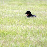 Name: dog03.jpg Views: 123 Size: 184.9 KB Description: