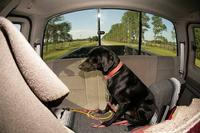 Name: dog01.jpg Views: 141 Size: 138.1 KB Description: