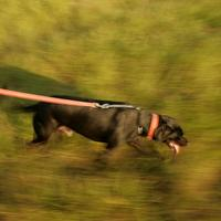 Name: dog05.jpg Views: 127 Size: 116.9 KB Description: