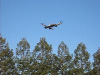 Name: tri_flight26.jpg Views: 100 Size: 66.1 KB Description:
