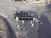 Name: dog.jpg