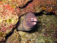 Name: scared Eel.jpg Views: 42 Size: 198.5 KB Description: