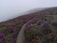 Name: Big Sur 023.jpg Views: 78 Size: 257.0 KB Description: When the clouds clear ( I call them clouds rather than fog when they are at 1800' ) the thermals really pop.