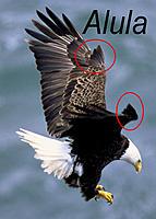 Name: Alula wing.jpg Views: 45 Size: 165.4 KB Description: