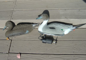 Name: db9s.jpg