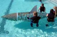 Name: PoolSharkTest.jpg