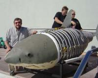 Name: bjvshark.jpg