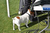 Name: Randys 034.jpg Views: 58 Size: 49.9 KB Description: Spike is checking out the sound system cables!