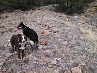 Name: IMG_20170305_135714_513_resize.jpg Views: 11 Size: 189.2 KB Description: Rocks and scrub pines. A little bacon grease smeared on the fuselage, and you get dog retrievals!