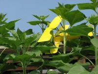 Name: TM #1 & Monster Plants, 07-31-06, #6.jpg Views: 254 Size: 80.0 KB Description: Ouch!