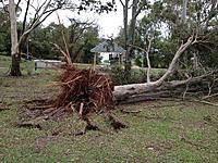 Name: Dowse lagoon tree.jpg