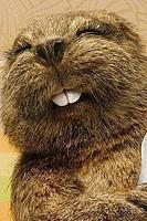 Name: beaver-1.jpg Views: 11 Size: 56.5 KB Description: