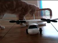 Name: Dzl180.jpg Views: 231 Size: 44.6 KB Description: even the cat likes it..he would like to chew it up! BAD KITTY!