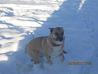 Name: Missy the monster.jpg