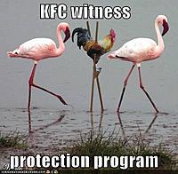 Name: kfc-flamingos.jpg Views: 340 Size: 40.2 KB Description: