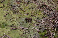 Name: DSC_0336.jpg