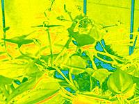 Infrared Camera conversion NIR NDVI - RC Groups