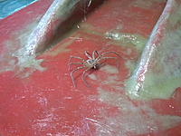 Name: 2012-10-29 12.22.55.jpg Views: 91 Size: 172.6 KB Description: Found this on the hull mould this morning,