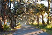 Name: Spanish Moss, Trees outside trailer park.jpg