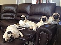 Name: Puggies.jpg