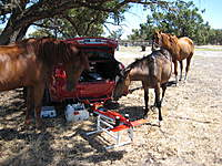 Name: Pic 009.jpg Views: 171 Size: 139.0 KB Description: Like I said, the horses are curious!  The big mare on the left ended up taking a chomp out of my transmitter case (silver, just near her front hooves).