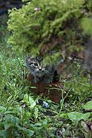 Name: CRW_0165.jpg Views: 56 Size: 132.0 KB Description: I is wild kitty !