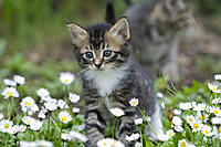 Name: CRW_0173.jpg