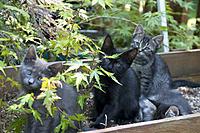 Name: CRW_0818.jpg Views: 73 Size: 136.0 KB Description: Keiko, Ichiro, Miki and Emi's ears.