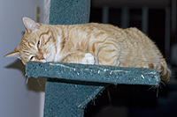 Name: CRW_1038.jpg
