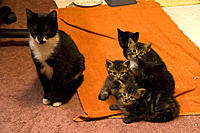 Name: CRW_9849.jpg Views: 71 Size: 123.6 KB Description: Sassy and her babies.