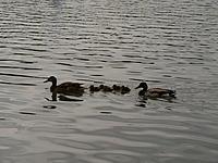 """Name: P1000170.jpg Views: 50 Size: 188.3 KB Description: """"Ducks in a row"""""""