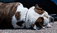 Name: 2011.06.18.0359.jpg