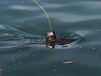 Name: 2012-01-08_156.jpg Views: 54 Size: 294.2 KB Description: Dive dive