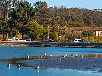 Name: 2013-06-20_0043.jpg Views: 56 Size: 113.3 KB Description: 20 June; mid-Lake starting to go dry...