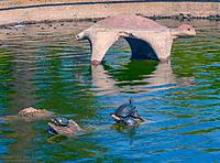 Name: 2013-08-13_TurtleComp_1b.jpg Views: 75 Size: 288.6 KB Description: