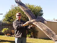 Name: RIMG0076.jpg Views: 209 Size: 271.4 KB Description: Andrew with his eagle