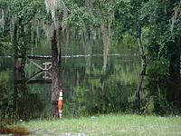 Name: DSCF0035.jpg Views: 34 Size: 232.3 KB Description: Close up of Flooded Tree Line...
