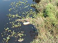 Name: DSCF0083.jpg Views: 60 Size: 312.6 KB Description: Flood Debris, Someone's Missing a Large LP Gas Tank...