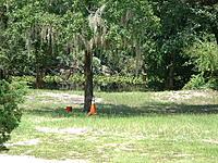 Name: DSCF0071.jpg Views: 56 Size: 318.7 KB Description: Close Up Shows Creek at Near Normal Level Beyond Treeline...