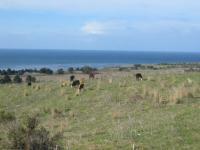 Name: farren_cattle.jpg Views: 257 Size: 59.9 KB Description:
