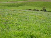 Name: IMG_1379.jpg Views: 119 Size: 136.9 KB Description: Beautiful Spring day