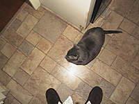 Name: AUT_0606.jpg Views: 83 Size: 55.3 KB Description: Anybody want a 20 pound cat?