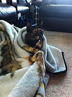 Name: blanket.jpg Views: 73 Size: 106.1 KB Description: