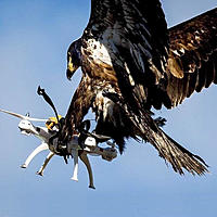 Name: Bird Strike.jpg